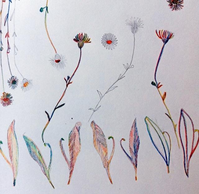 desenhos-folhas